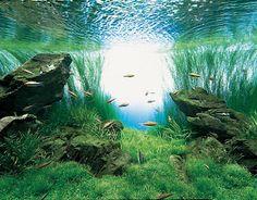 Aquatic Eden: planted aquarium basics - Aquascaping Aquarium Blog