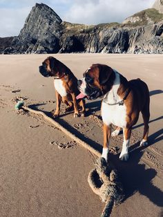 Henry & Ike playing with a big rope in front of Three Cliffs New Tear's Day 2018