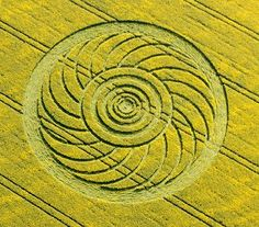 Discovered on 29 April at the top of Roundway Hill near Devizes. in diameter and appeared on oilseed rape. The design resembles a chrysanthemum flower with eighteen petals surrounding a centre of five concentric circles. Aliens And Ufos, Ancient Aliens, Ancient History, Crop Circles, Crop Field, Ancient Egyptian Art, Ancient Greece, Mandala, Alien Art