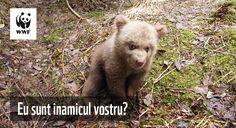 Fără soluții reale pe termen lung ne vom întoarce la practica veche a vânătorii pentru trofeu a animalelor sălbatice protejate, în defavoarea comunităților locale, a naturii și a societății în general. Black Bear, Brown Bear, American Black Bear