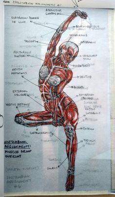 Exceptional Drawing The Human Figure Ideas. Staggering Drawing The Human Figure Ideas. Male Figure Drawing, Figure Drawing Reference, Anatomy Reference, Pose Reference, Human Anatomy Drawing, Human Body Anatomy, Human Anatomy For Artists, Anatomy Sketches, Medical Art