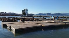 The sea lions of Pier 39