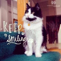 """From @randy_thecat: """"Randy loves to smile and loves to make other people smile too!"""" #catsofinstagram"""
