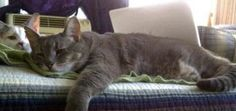 In honor of Adopt-a-Senior-Pet Month, we present five ways that elder kitties are cooler cats. Old Cats, Advice, Entertainment, Awesome, Animals, Animales, Tips, Animaux, Animal