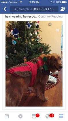 Close  Tag PhotoOptionsShareSendLike Like Love Haha Wow Sad Angry Photos from Sharon Magnuson Mlyniec's post in DOGS- CT Reunited  Sharon Magnuson MlyniecDOGS- CT Reunited December 20 ·   Found his way home. West Haven Beach