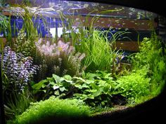 Aquascaping | creativeDesign: Aquascape's Composition