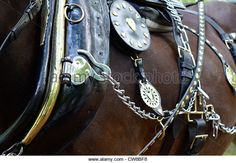 Horse brasses on a working shire horse - Stock Image