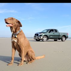 Mason my dog on the beach with my Toyota Tundra