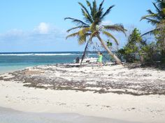 Ilêt du gosier (Guadeloupe)