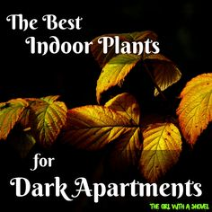 Here's a list of plants for dark, indoor areas. All thrive in low light conditions and most are easy, low maintenance houseplants as well. Check it out!