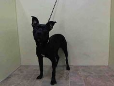 GONE --- Manhattan Center    MARLEY - A1006354    MALE, BLACK / WHITE, PIT BULL MIX, 1 yr  STRAY - STRAY WAIT, NO HOLD  Reason STRAY   Intake condition NONE Intake Date 07/12/2014, From NY 11205, DueOut Date 07/15/2014,   Video: http://youtu.be/f0UwZqyrcN8   New thread: https://www.facebook.com/photo.php?fbid=836629536349927&set=a.617938651552351.1073741868.152876678058553&type=3&permPage=1