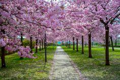 https://flic.kr/p/Fc3EKg | The spring is here | Villeneuve D'ascq, France
