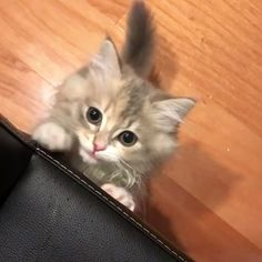 Funny Cats and Kittens Jump Meowing Cute Cats And Kittens, I Love Cats, Crazy Cats, Cool Cats, Kittens Cutest, Kitty Cats, Cute Funny Animals, Cute Baby Animals, Animals And Pets