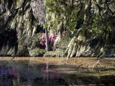 """Spanish Moss"", by Tom Foley taken at Charleston, SC"