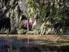"""""""Spanish Moss"""", by Tom Foley taken at Charleston, SC"""