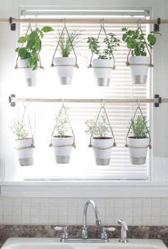 DIY Indoor Hanging Herb Garden // Learn how to make an easy, budget-friendly han. - DIY Indoor Hanging Herb Garden // Learn how to make an easy, budget-friendly hanging herb garden fo - Culture D'herbes, Traditional Curtains, Traditional Windows, Traditional Decor, Hanging Herbs, Diy Hanging, Hanging Herb Gardens, Vertical Gardens, Vertical Planting
