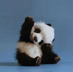 Baby Panda. <3
