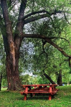 Bank / Gartenbank / Parkbank - Bench in the Park / Garden Bench