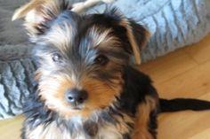 quelques photos Quelques Photos, Dogs, Animals, Animales, Animaux, Pet Dogs, Doggies, Animal, Animais