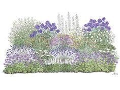 This perennial flowerbed provides space in a small garden and brings a lot of … - GArdendiy. White Gardens, Small Gardens, Rosen Beet, Planting Plan, Landscape Architecture Design, Garden Journal, Purple Garden, Veg Garden, Flowers Perennials