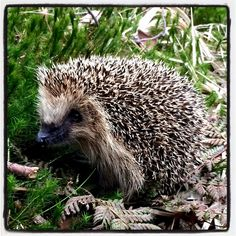 Cute hedgehog in the forest