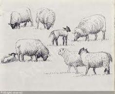 wonderful sheep sketches