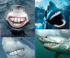Oh my goodness. Sharks would not be as scary if they looked like this!