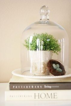 I have cloches. Do a table in natural and found things under glass - birds nests, moss, eggs, single blossom, etc. The Bell Jar, Bell Jars, Cloche Decor, Deco Luminaire, Fleur Design, Design Design, Design Ideas, Deco Floral, Glass Terrarium