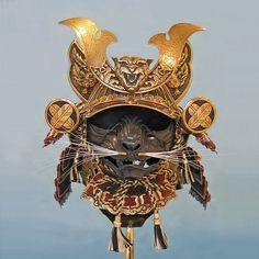 helmet for cats