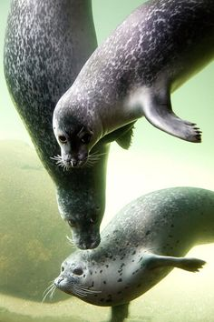 Seals so beautiful - repinned for www.CavemenTimes.com