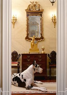 the great Great Dane