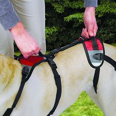 Total Pet Health Lift and Go Dog Lead Medium Red >>> Check out the image by visiting the link.Note:It is affiliate link to Amazon.