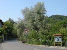 Valle Albarola road