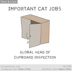 Important Cat Jobs: Global Head of Cupboard Inspection Haha Funny, Funny Cats, Animals And Pets, Funny Animals, Last Lemon, Cat Traps, Princess Kitty, What Cat, Cool Pets