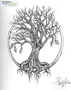 old tree drawing - Google Search