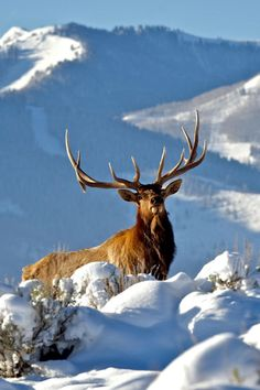 Animals That Live in Romania The Adventures of Kiara Yew : Deer watching in the snow. Winter is magic in Romania! wildlife romania forest woods outdoors nature photos photography cuteanimals beautifulnature scenery naturephotography pictures Animals That Amazing Animals, Majestic Animals, Animals Beautiful, Nature Animals, Animals And Pets, Cute Animals, Wild Animals, Baby Animals, Photo Animaliere