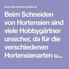 Beim Schneiden von Hortensien sind viele Hobbygärtner unsicher, da für die verschiedenen Hortensienarten unterschiedliche Schnittregeln gelten. Hier