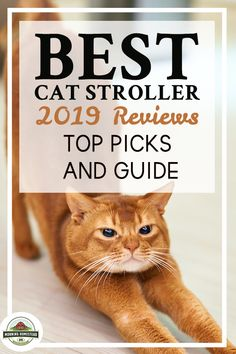 Best Cat Stroller: 2019 Reviews (Top Picks) And Guide! Small homesteading ideas, homesteading ideas simple living, homesteading ideas self sufficient, homesteading ideas small farm, homesteading ideas diy, homesteading ideas off grid, backyard homestead ideas, tiny homestead ideas, homesteading ideas gardening, Homestead farm, backyard Homestead, flower Gardening, vegetable Gardening. #homestead #homesteading #homesteader #homesteadlife #homesteadkitchen #homesteadinglife #homesteadgifts Flower Gardening, Vegetable Gardening, Vegetables Garden, Cat Stroller, Raising Cattle, Farm Lifestyle, Rabbit Breeds, Diy Projects For Beginners, Baby Horses