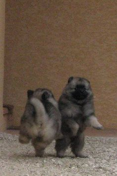 dancing Kees