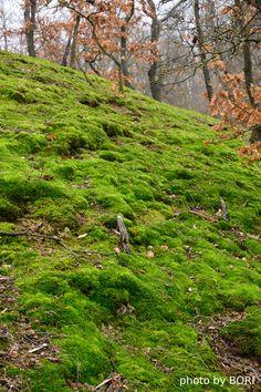 Kőről-kőre teljesítménytúra green moss Mountains, Landscape, Architecture, City, Green, Nature, Plants, Photos, Travel