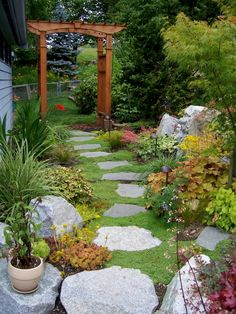 Corsican mint ground cover - this is the ground cover I chose for my court yard.  It is doing well.