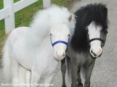 Takoma and Magic, Gentle Carousel Miniature Therapy Horses