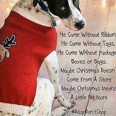 #adoptdontshop #nomorepuppymills