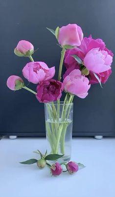 Good Morning Beautiful Flowers, Beautiful Good Night Images, Beautiful Flowers Garden, Beautiful Morning Messages, Amazing Flowers, Beautiful Roses, Pretty Flowers, Wallpaper Nature Flowers, Rose Flower Wallpaper