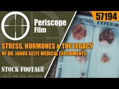 STRESS, HORMONES & THE LEGACY OF DR. JANOS SELYE MEDICAL EXPERIMENTS ON MICE & RATS FILM 57194 - YouTube