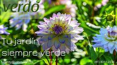 INSECTICIDAS RODENTICIDAS TERMICIDAS FERTILIZANTES ASPERSORAS HERBIBIDAS SEMILLAS SUSTRATOS FUNGICIDAS EQUIPO DE SEGURIDAD Estamos en Paseo de los Leones No. 1781 Cumbres 1er Sector entre Churubusco y 20ava. Teléfono: (81) 8311-2234 Facebook fan page: http://ift.tt/2dTGqUo