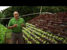 Hidroponia con el nuevo sistema NGS (New Growing System) y los sustratos hidropónicos de EASY PLANT®
