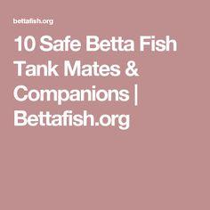 10 Safe Betta Fish Tank Mates & Companions | Bettafish.org