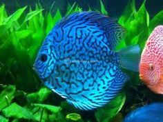 How To Get Started With Salt Water Fishing – Fanel Sport Pretty Fish, Cool Fish, Beautiful Fish, Tropical Freshwater Fish, Freshwater Aquarium Fish, Tropical Fish, Beautiful Sea Creatures, Animals Beautiful, Exotic Fish