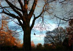 Bäume im Dezember - Jahreszeiten - Galerie - Community